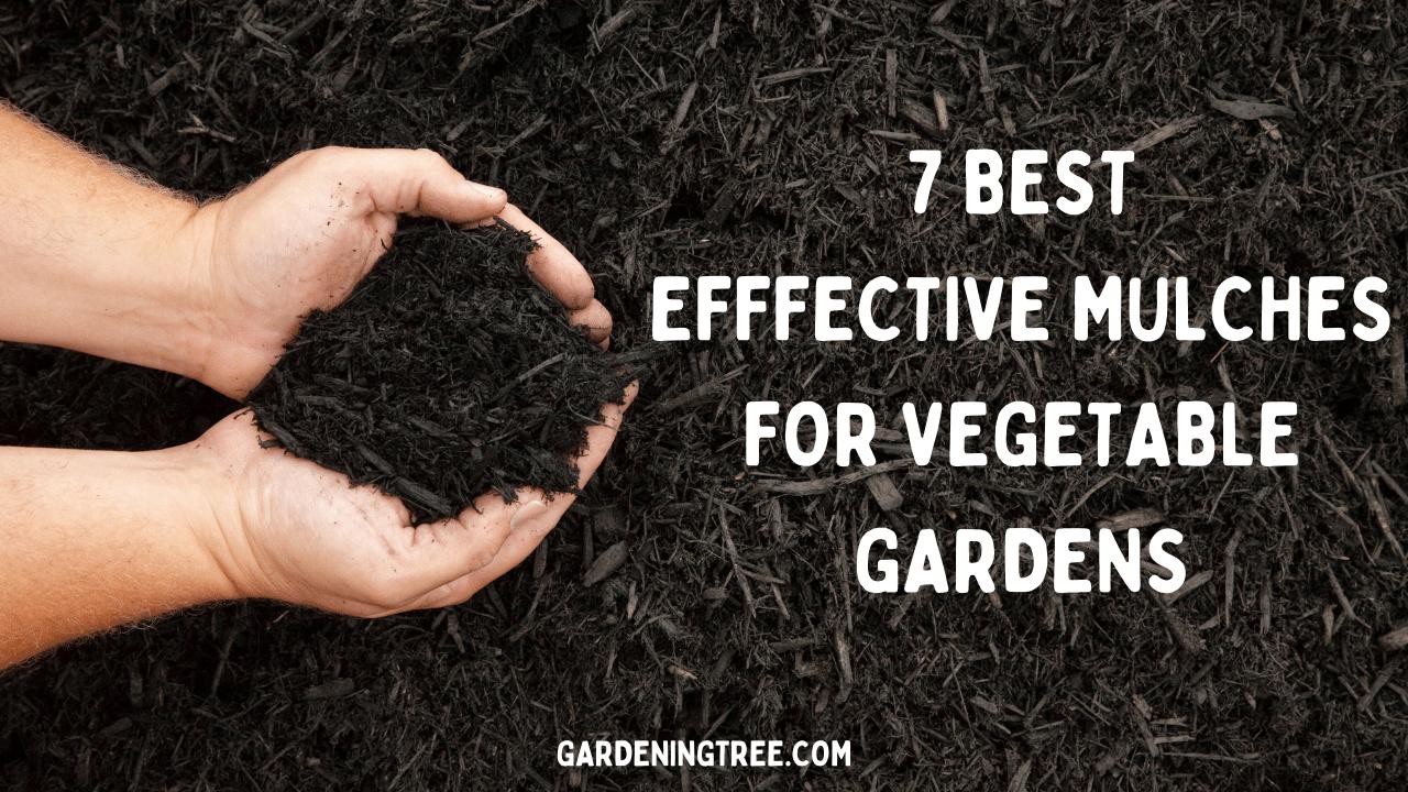 7 best effective mulches for vegetable gardens