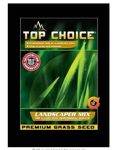 best grass seed for lawn