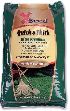 Best Grass Seed For Garden