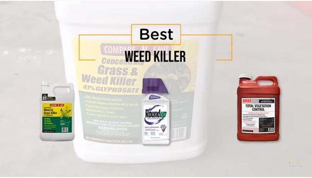 best-weed-killer