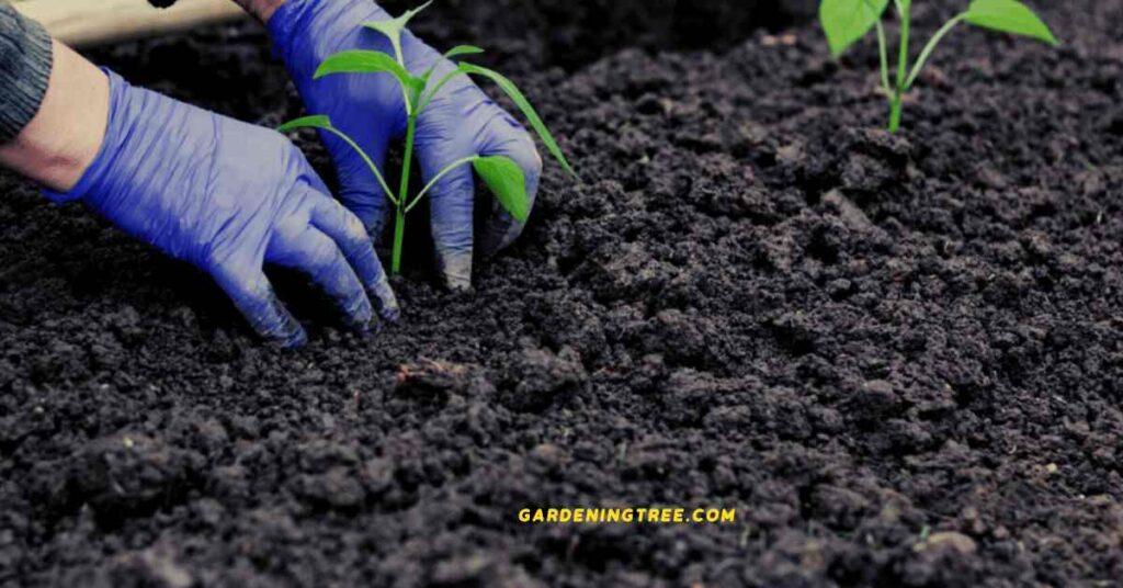 Gardeningtree