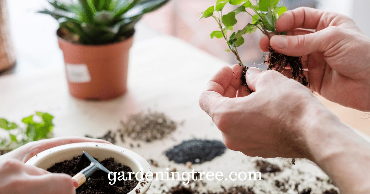 best-potting-soil
