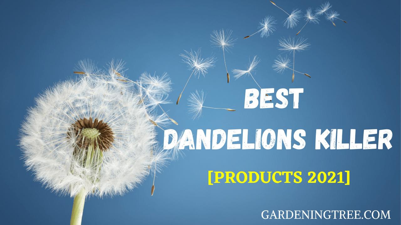 Best Dandelions Killer
