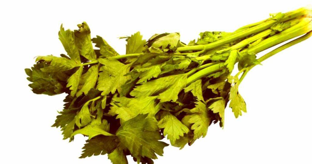 parsley hd image