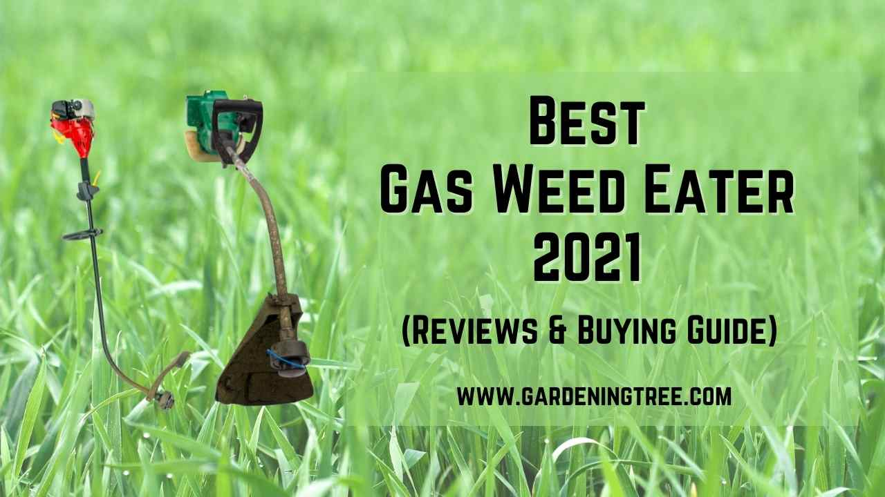 Best Gas Weed Eater 2021