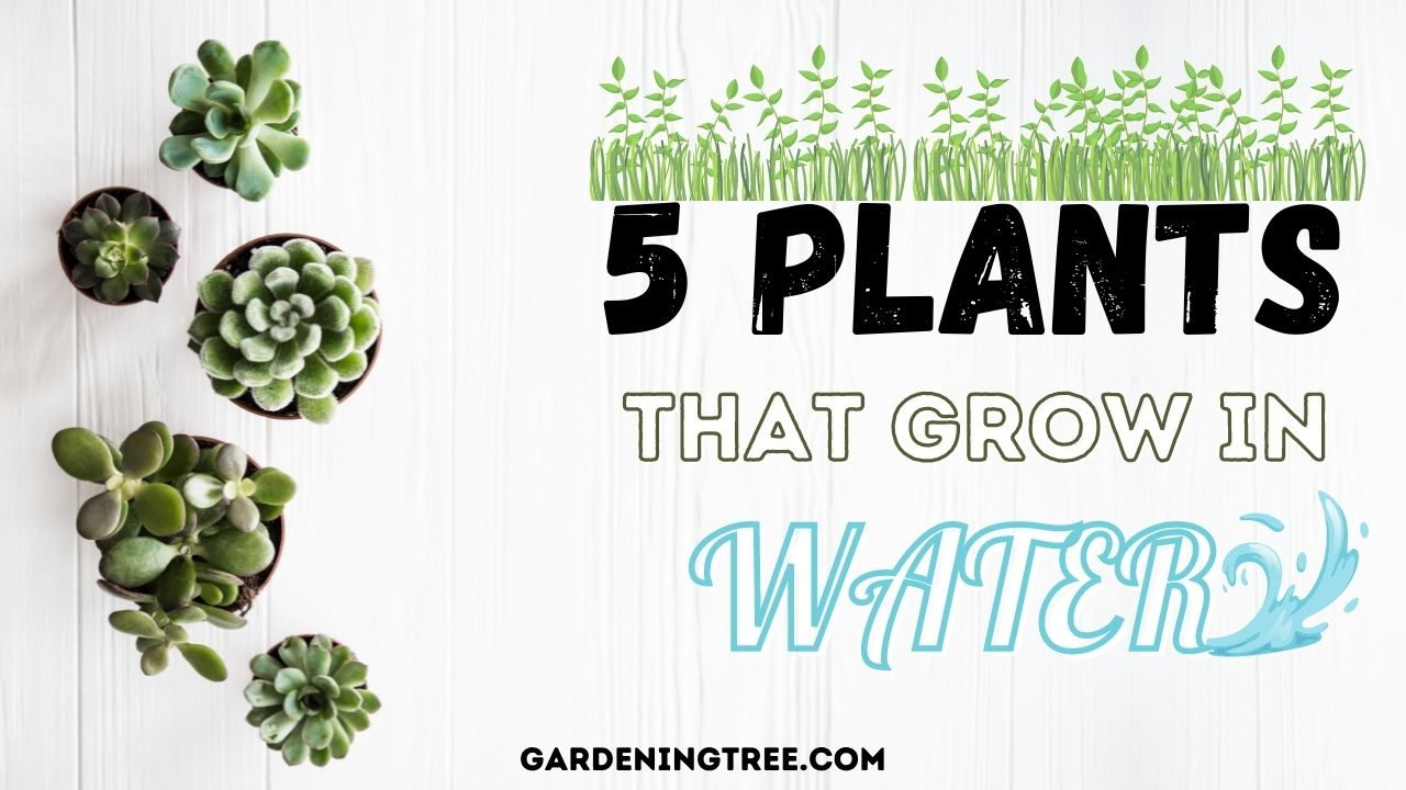 5 Plants That Grow in Water