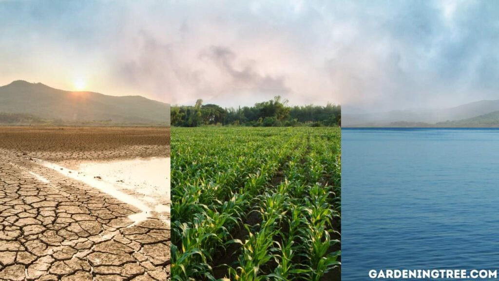 Climate Condition