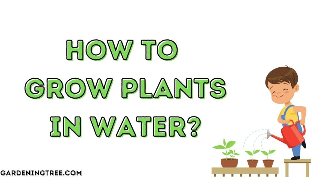 How to Grow Plants in Water?
