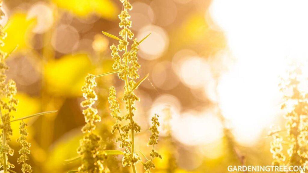 light to plants