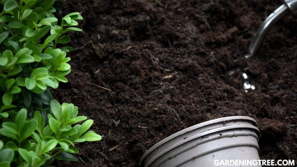 plant compost