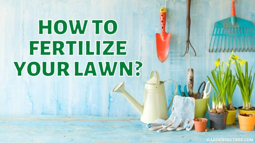 How to Fertilize Your Lawn?